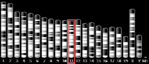 chromosome-11